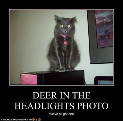 Deerheadlights